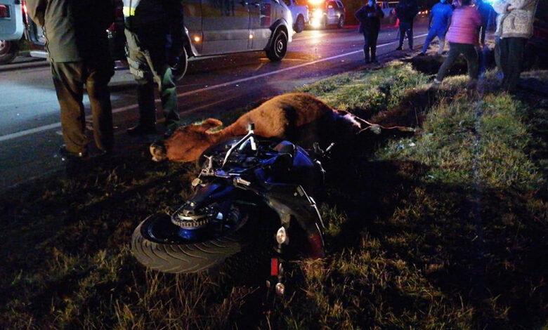 Photo of Motociclista fallece luego de impactar contra un vacuno en la carretera